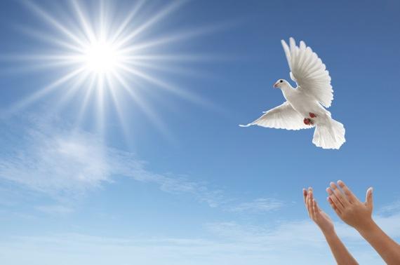 Dove takes flight