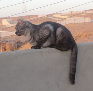 Tabitha on roof wall.jpg