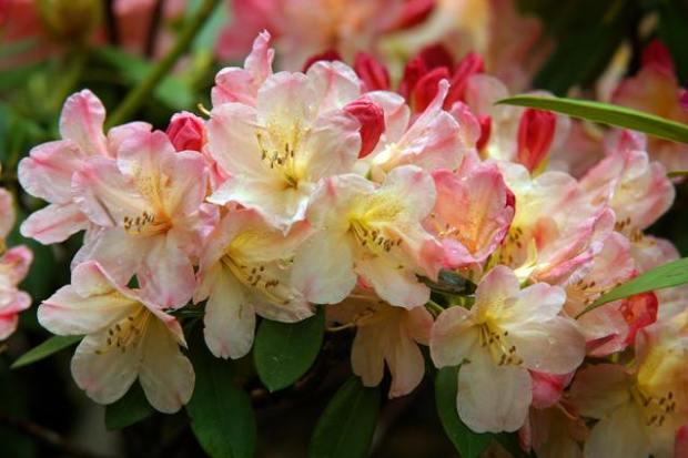 flowers-1397224-638x425