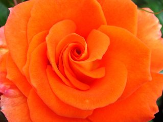 pretty-petals-1183418