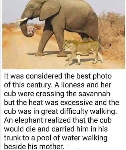 Elephant and Lion