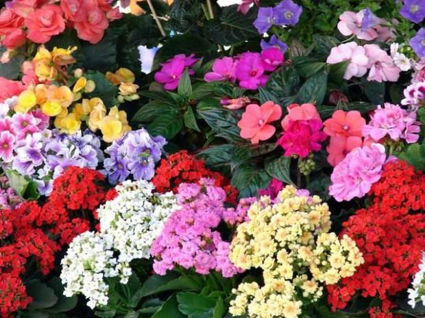 flowers-1397812-640x480